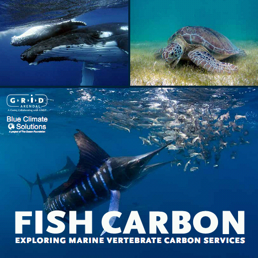 Introducing Fish Carbon!