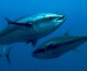 Oceanic Blue Carbon in the High Seas Alliance Newsletter
